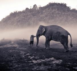 野生动物摄影诀窍