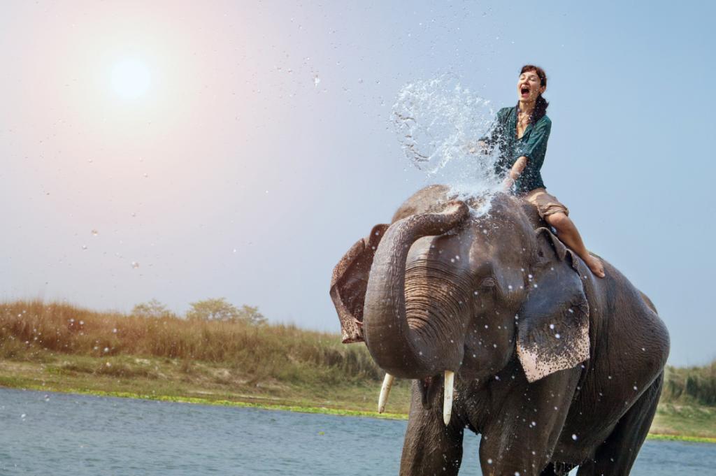 清迈大象近距离