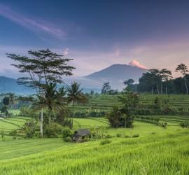 Terrace rice field in Bali in Indonesia