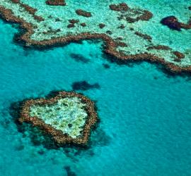 Australian reef bareer
